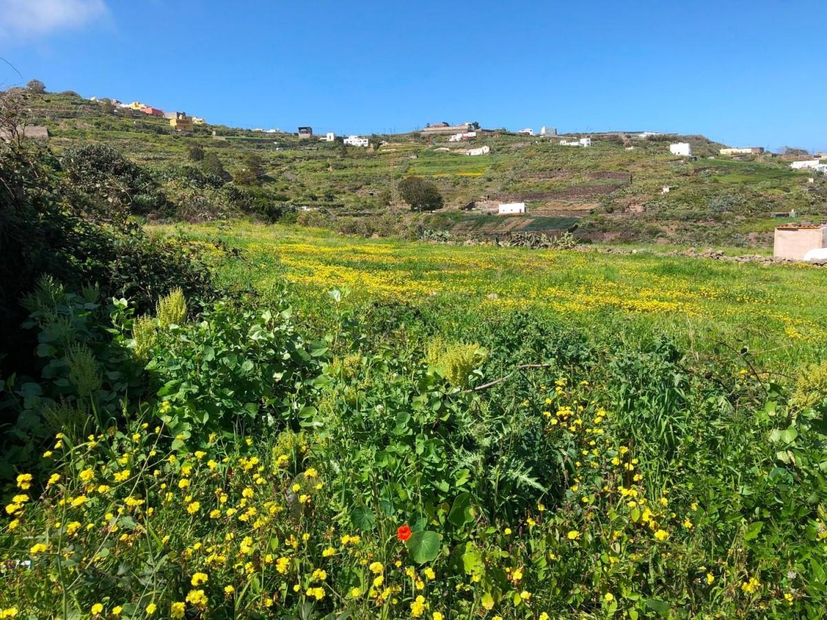 Suelo No Urbano en Venta en  Santa Maria De Guia De Gran Canaria