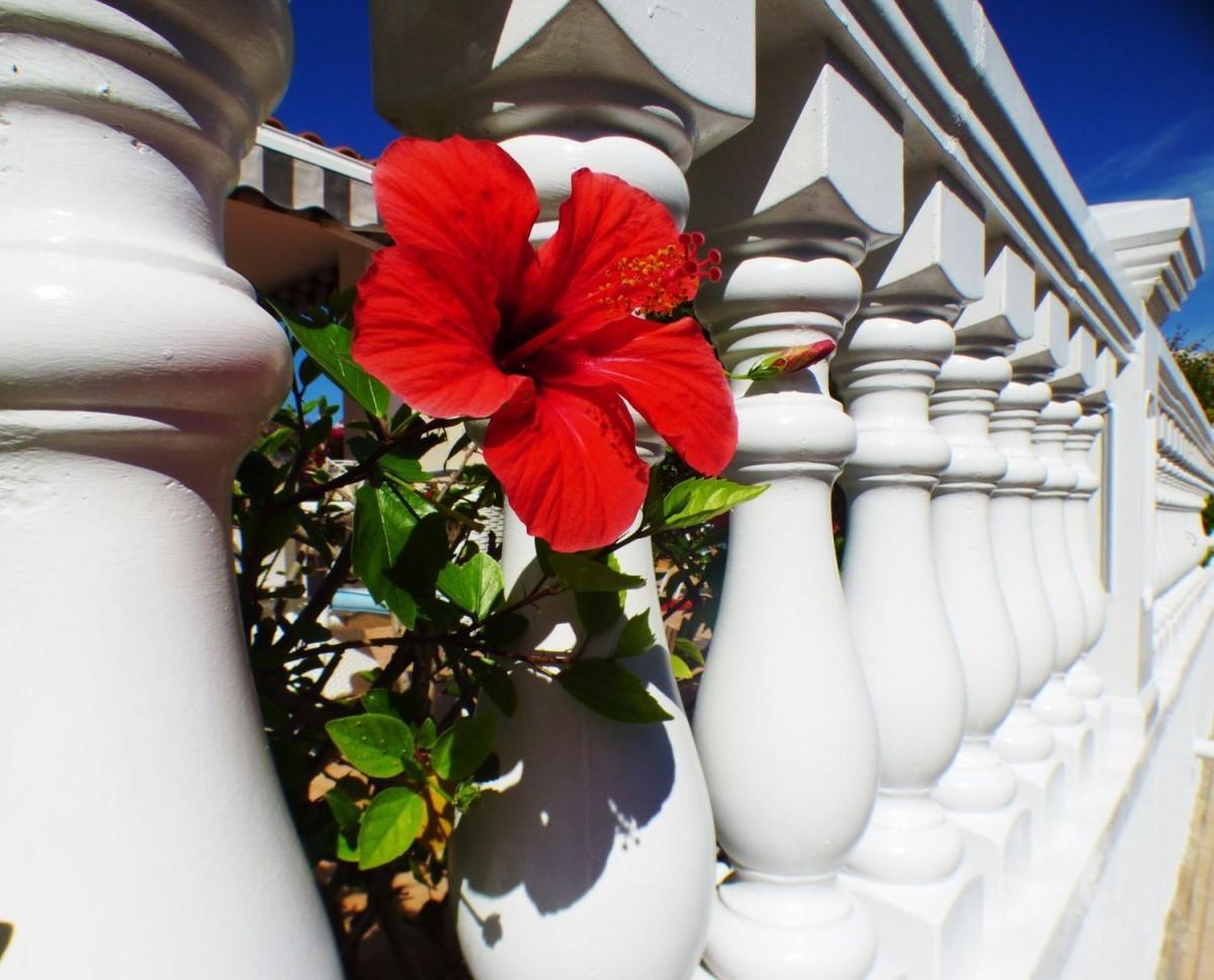 Piso en Venta en Orihuela Costa, Orihuela