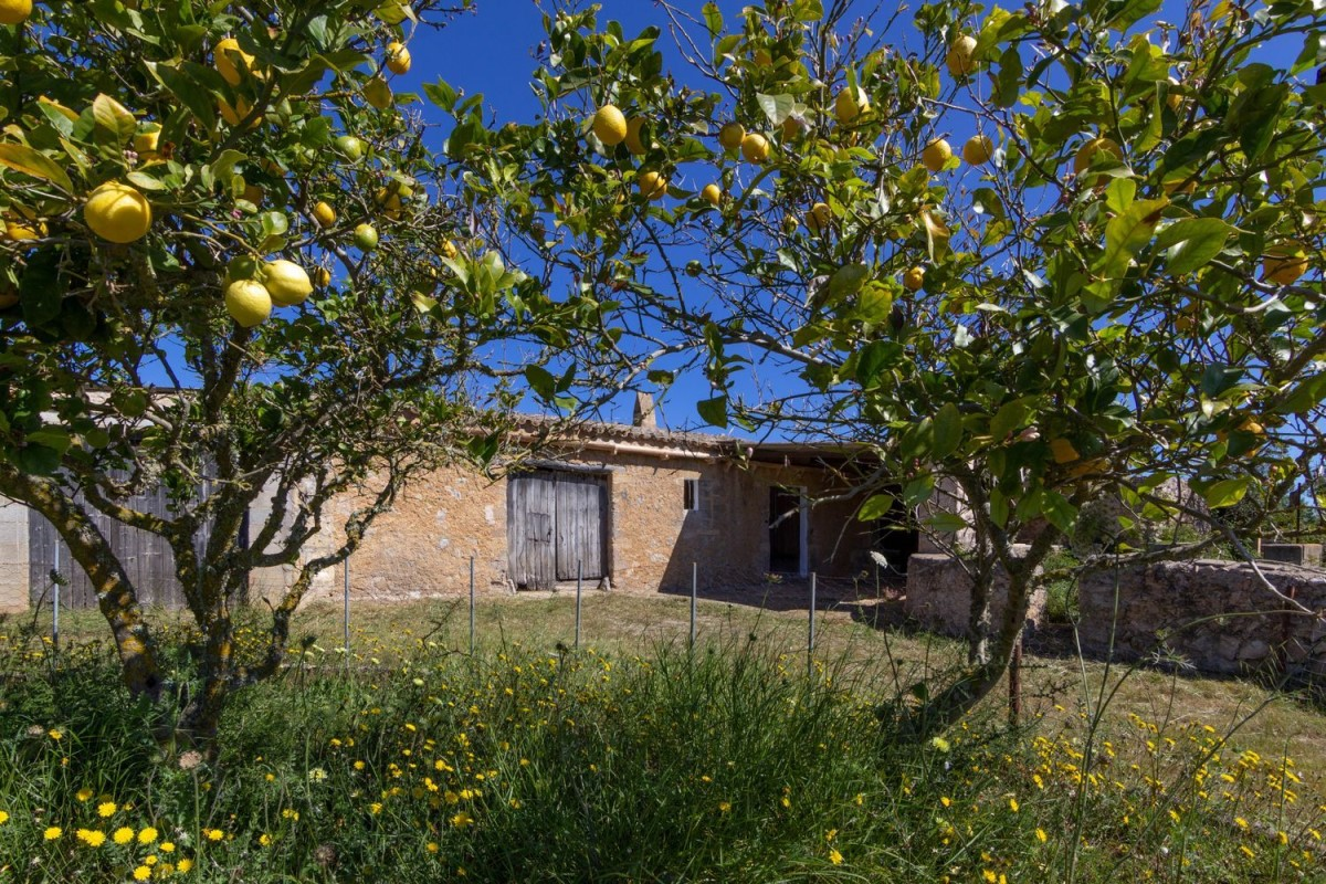 Casa Rural en Venta en  Son Servera