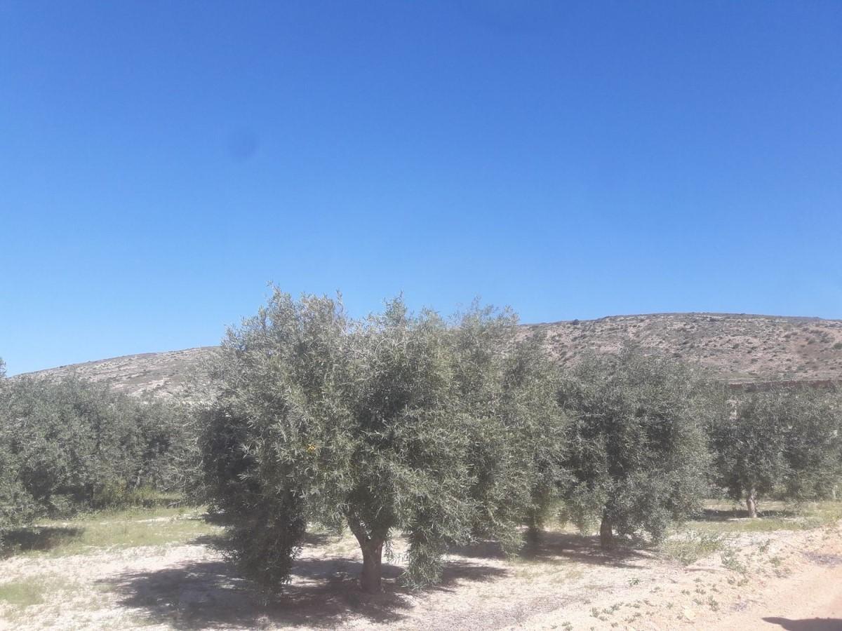 Suelo No Urbano en Venta en Los Ángeles-Tómbola-San Nicolás, Alicante/Alacant
